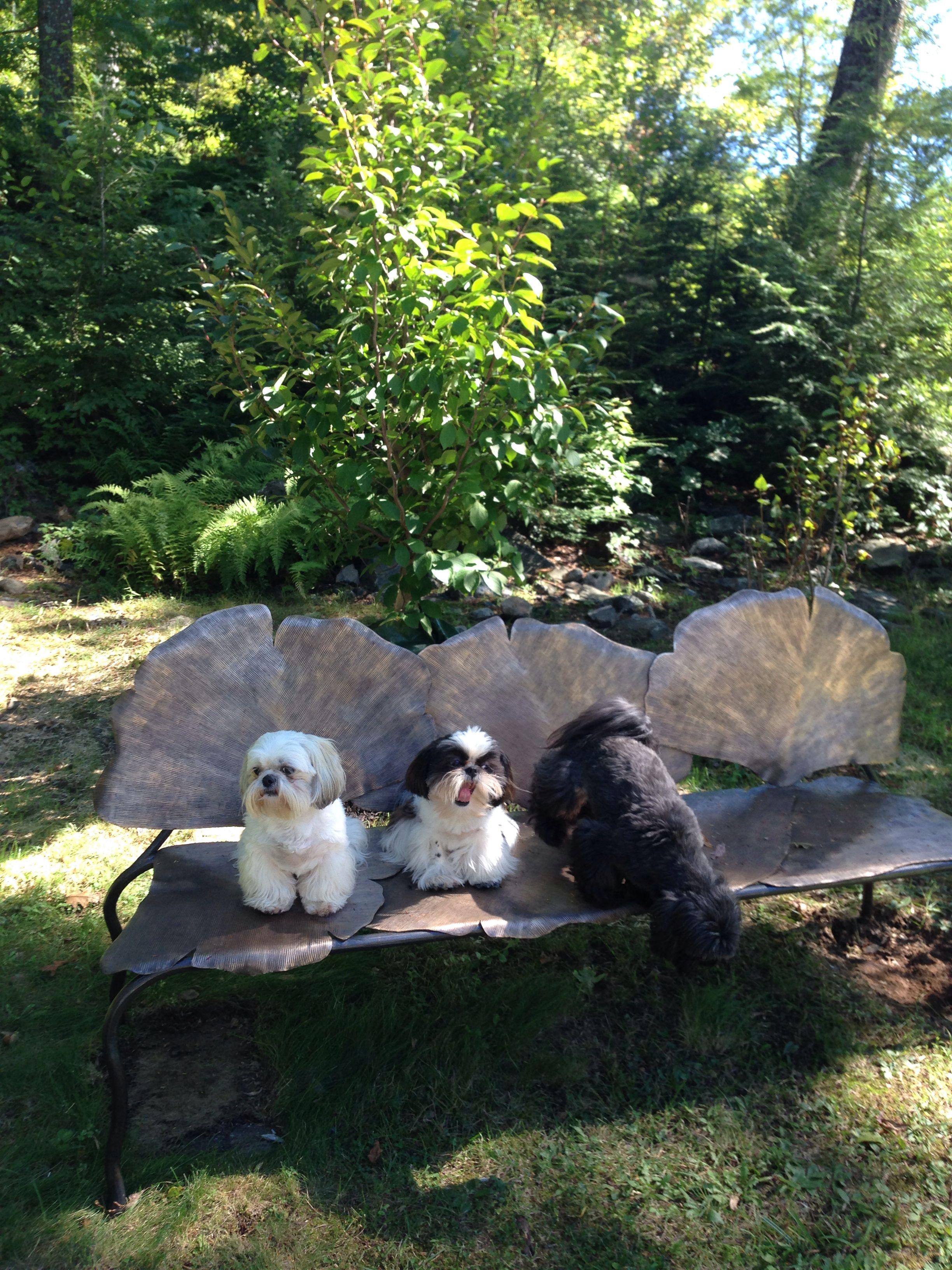 Hercule, Clara and Dora on my new bronze bench in my garden!
