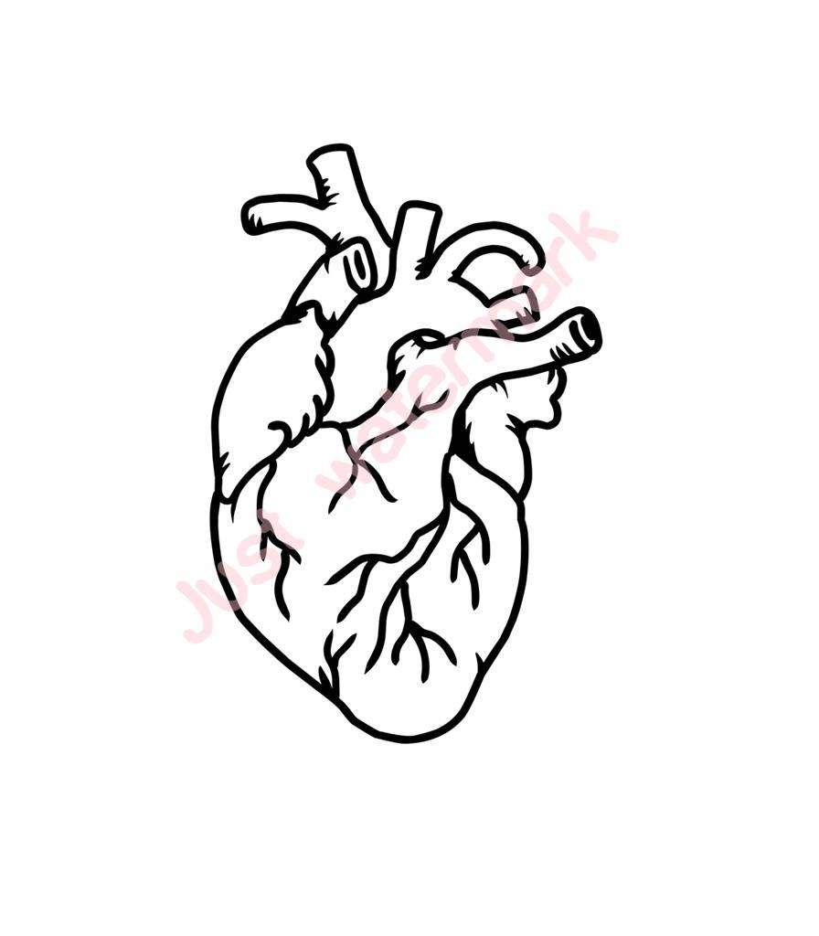 Human Heart Line Drawing Jpgsvg Real Hand Drawing For Printing