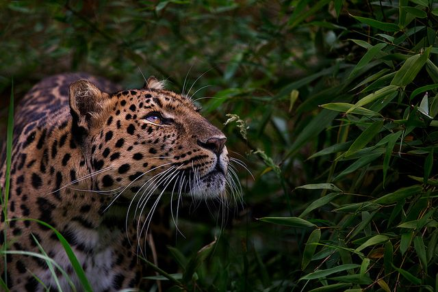 Spotted... by Billy Currie, via Flickr