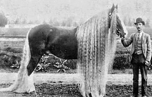 Zijn er dieren waarvan de haren net als bij mensen doorgroeien?
