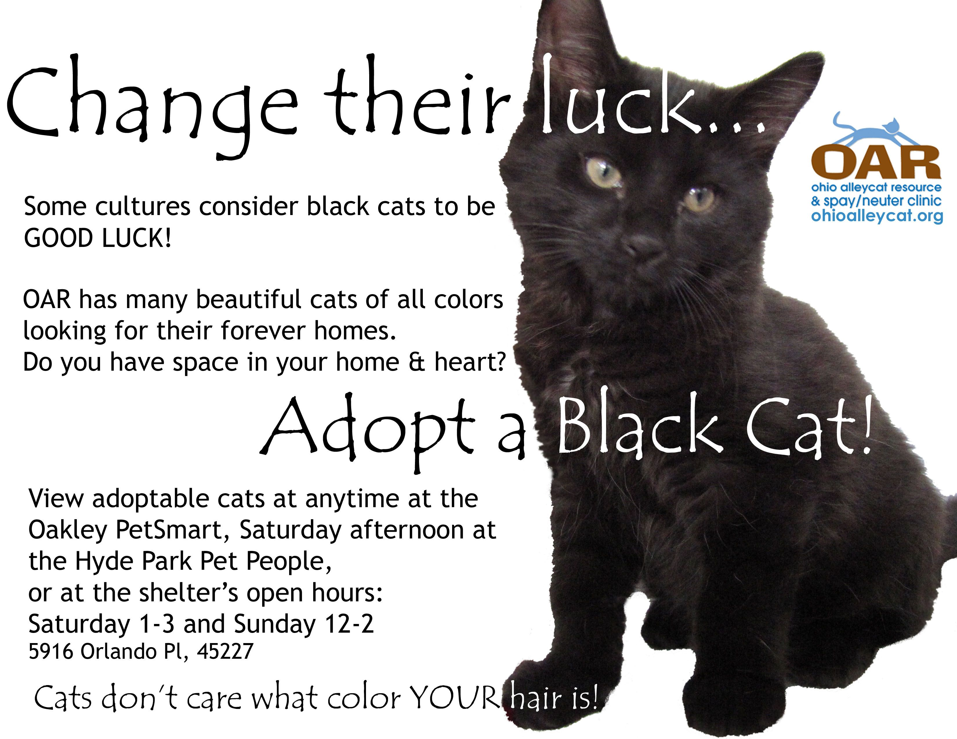 Friday The 13th Consider Adopting A Lucky Black Cat Cat Adoption Cats Black Cat