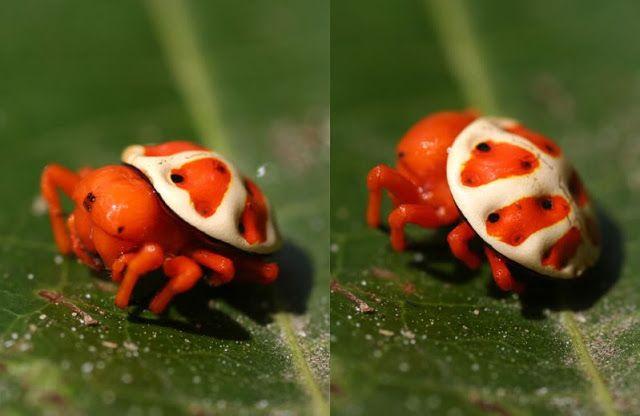 Riscuri pentru sanatate in calatorie (I) - Endemică de insecte