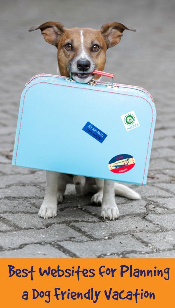 Best Vacation Panning Resources for Dog Friendly Travel from www.YouDidWhatWit...