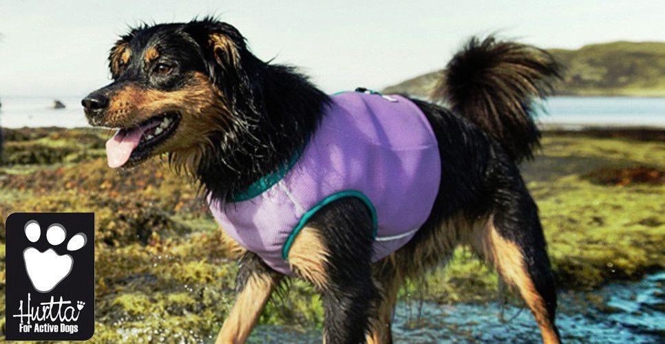 Cooling Vest Cool Pets Dog Boutique Dogs