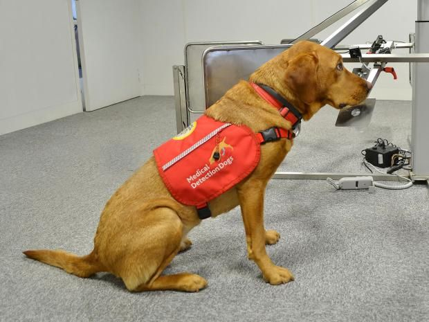 Dogs May Be Able To Smell Malaria In Humans And Help With Quicker Detection Scientists Claim Dogs With Jobs Detection Dogs Dog Charities