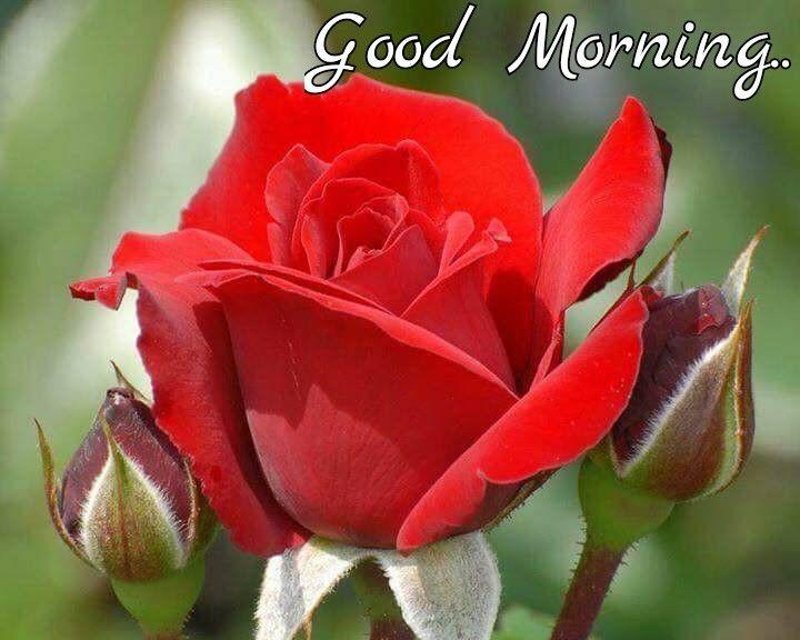 Good Morning Good Morning Beautiful Flowers Good Morning Beautiful Happy Morning