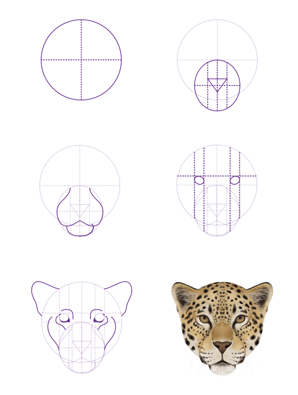 How To Draw Animals Big Cats Their Anatomy And Patterns Part 2