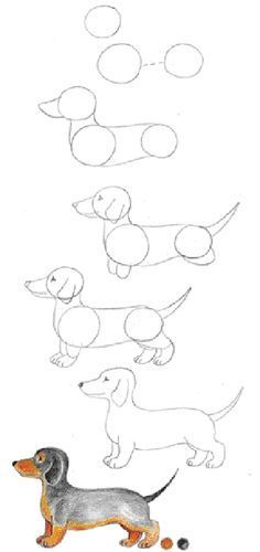1. Start with three circles. Notice that the middle circle is slightly larger. 2. Add a muzzle. Draw curving lines for the neck, belly and back. 3. Draw a nose and an eye. Add a line for the mouth. Draw an ear. Draw a tail. Begin the legs. 4. Complete all four legs. Add toes to the paws. 5. Erase extra lines. 6 Shade and color your dachshund.
