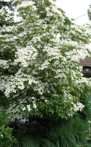 Hausbäume für kleine Gärten | Alle Blumen, Kleine bäume und Boden