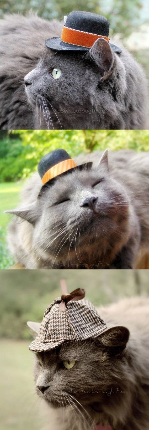 Hats For Cats. Don't these guys look spiffy? ad cat