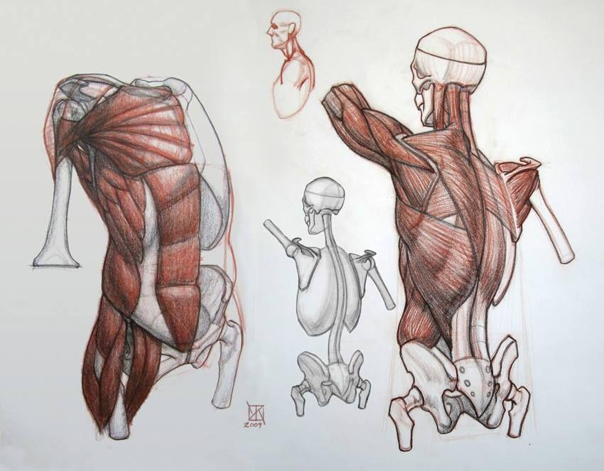 Pin von Yasser Henawy auf Character Anatomy | Pinterest