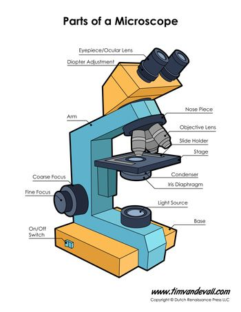 microscope diagram science printables pinterest science biology worksheets and school. Black Bedroom Furniture Sets. Home Design Ideas