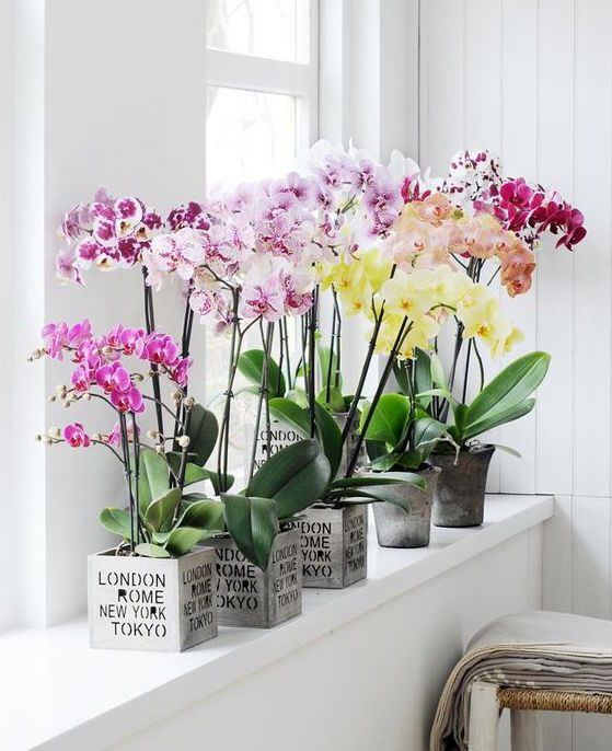 Secrets Of 8 Feng Shui Flower Symbols In 2020 Orchid Arrangements Growing Plants Indoors Orchids