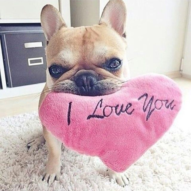 I Love You Pictures Photos And Images For Facebook Tumblr Pinterest And Twitter Cute Animals Bulldog Puppies Cute French Bulldog