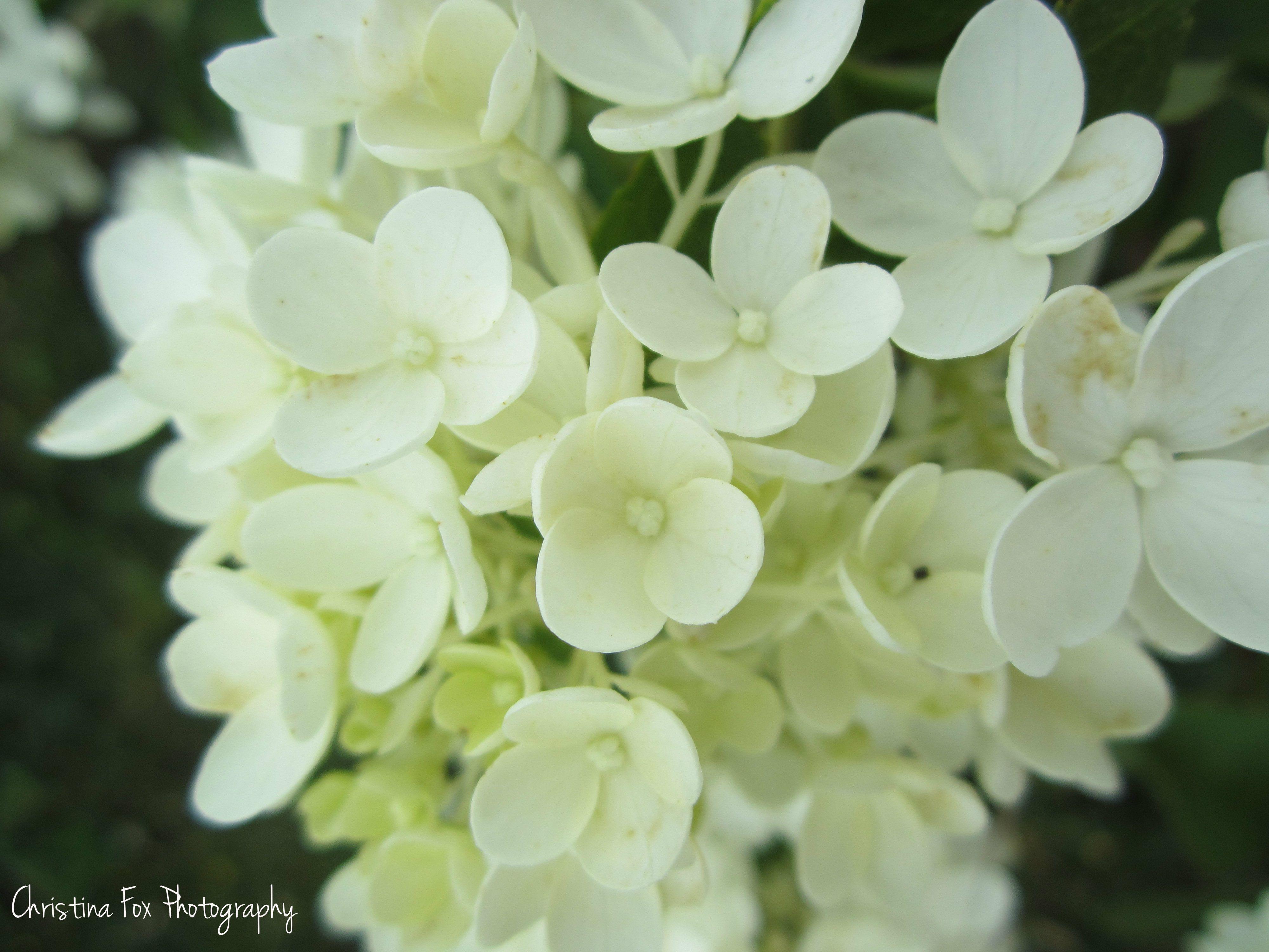 https://www.facebook.com/photo.php?fbid=426633404054498=a.367300473321125.102912.184808384903669=3