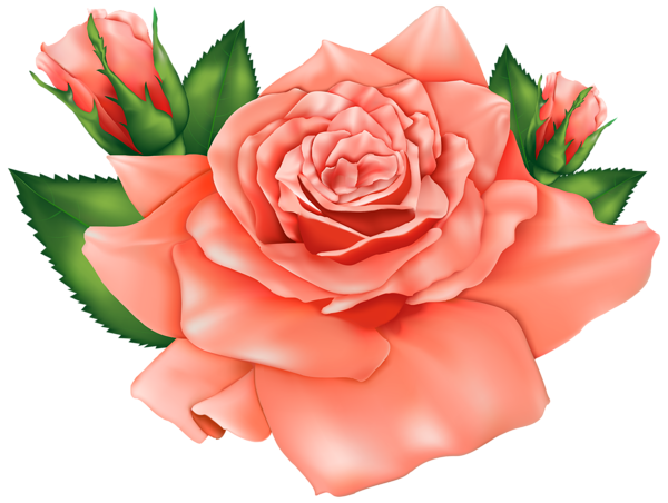 Orange Roses Png Clipart Image Flower Clipart Beautiful Flower Drawings Flower Art