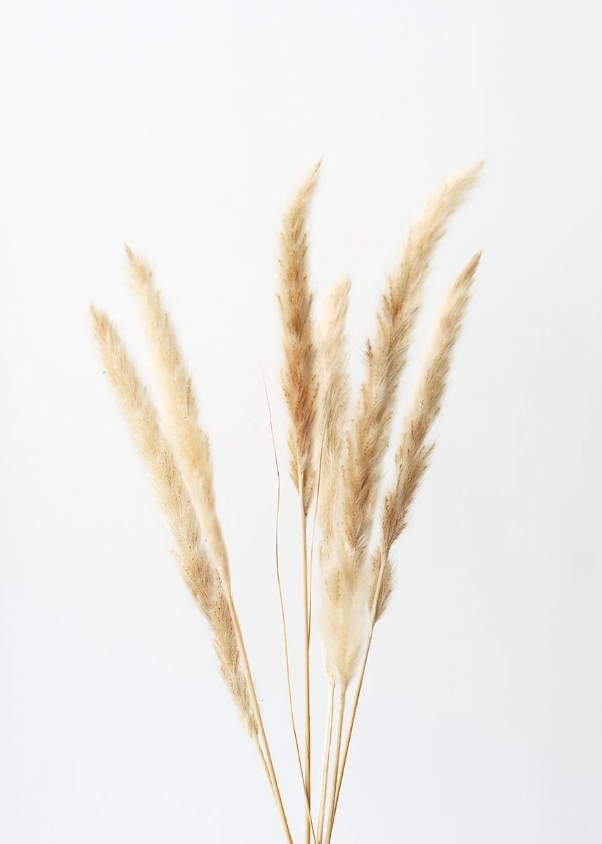 Pack Of 6 Smooth Natural Tan Pampas Grass 25 29 5 Default Title In 2021 Pampas Grass Pampas Grass Decor Dried Flowers
