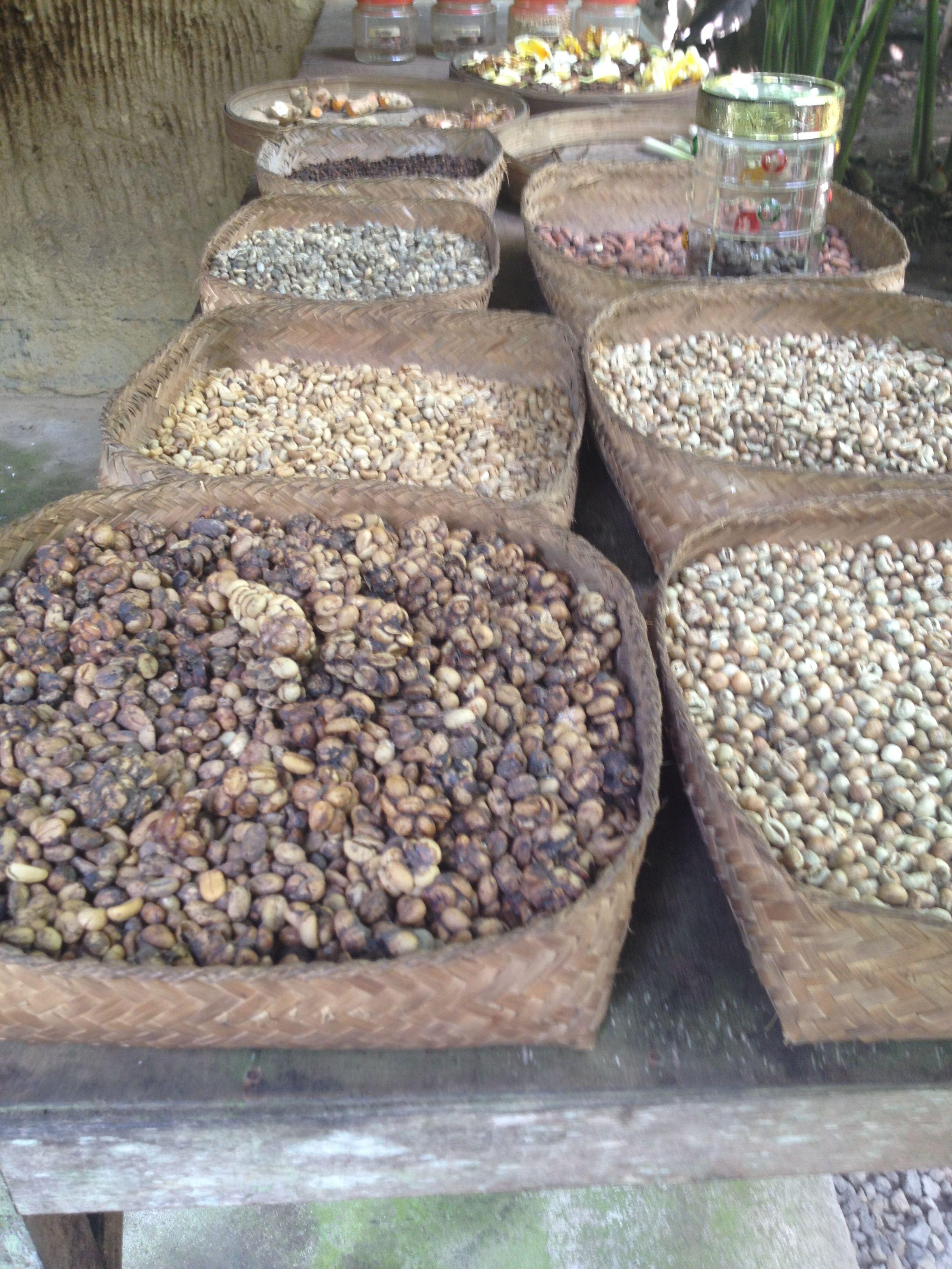 Coffee Luwak Bali, Indonesia Bali, Indonesia