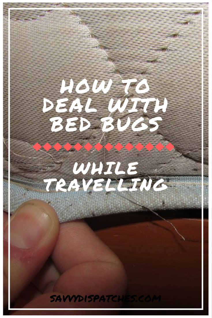 How To Deal With Bed Bugs While Traveling Bed bugs, Bed