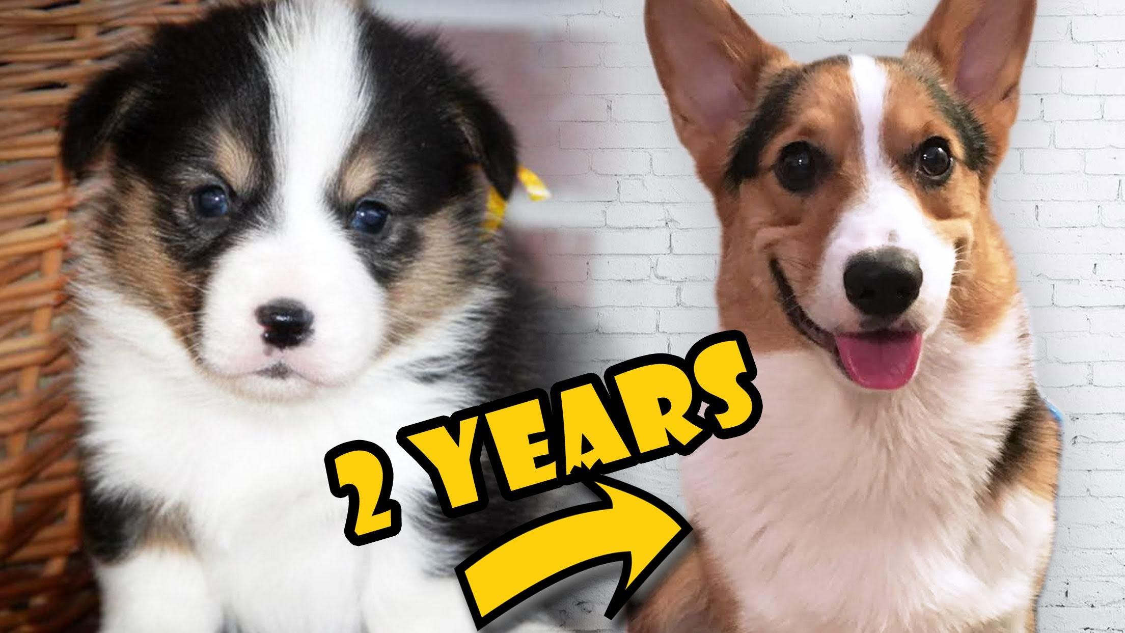 2 Year Anniversary of Puppy to Adult Dog. Also