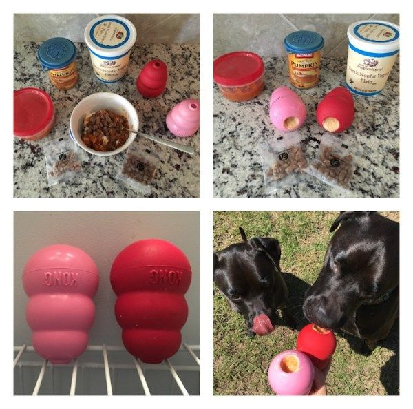 K9sOverCoffee | How To Keep Your Pup Entertained With Vital Essentials Freeze-Dried Nibs and a KONG Food Puzzle!