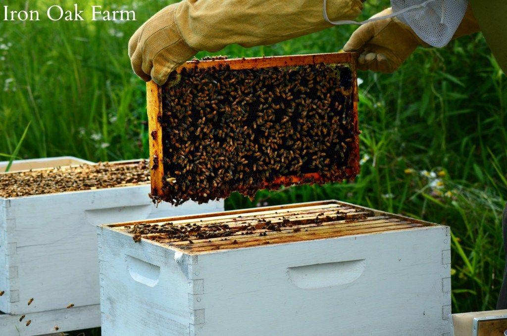 Splitting the Hive Keeping Backyard Bees | Backyard bee ...