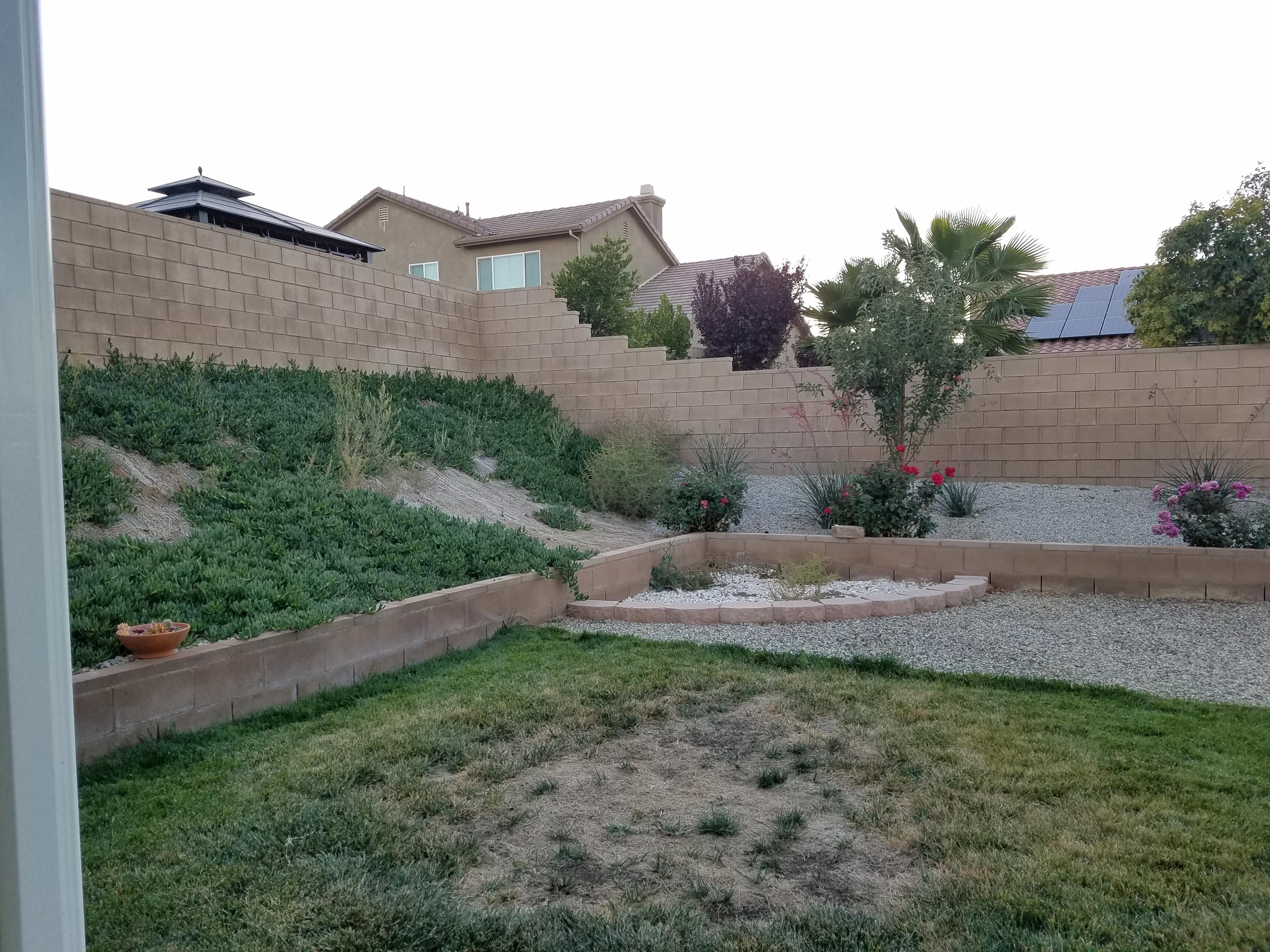 Advice on tree planting for backyard privacy #gardening #garden #DIY #home #flowers #roses #nature #landscaping #horticulture