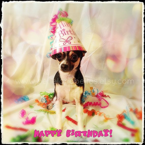 Chihuahua Birthday Card Funny Chihuahua Card Dog Gone Terrific