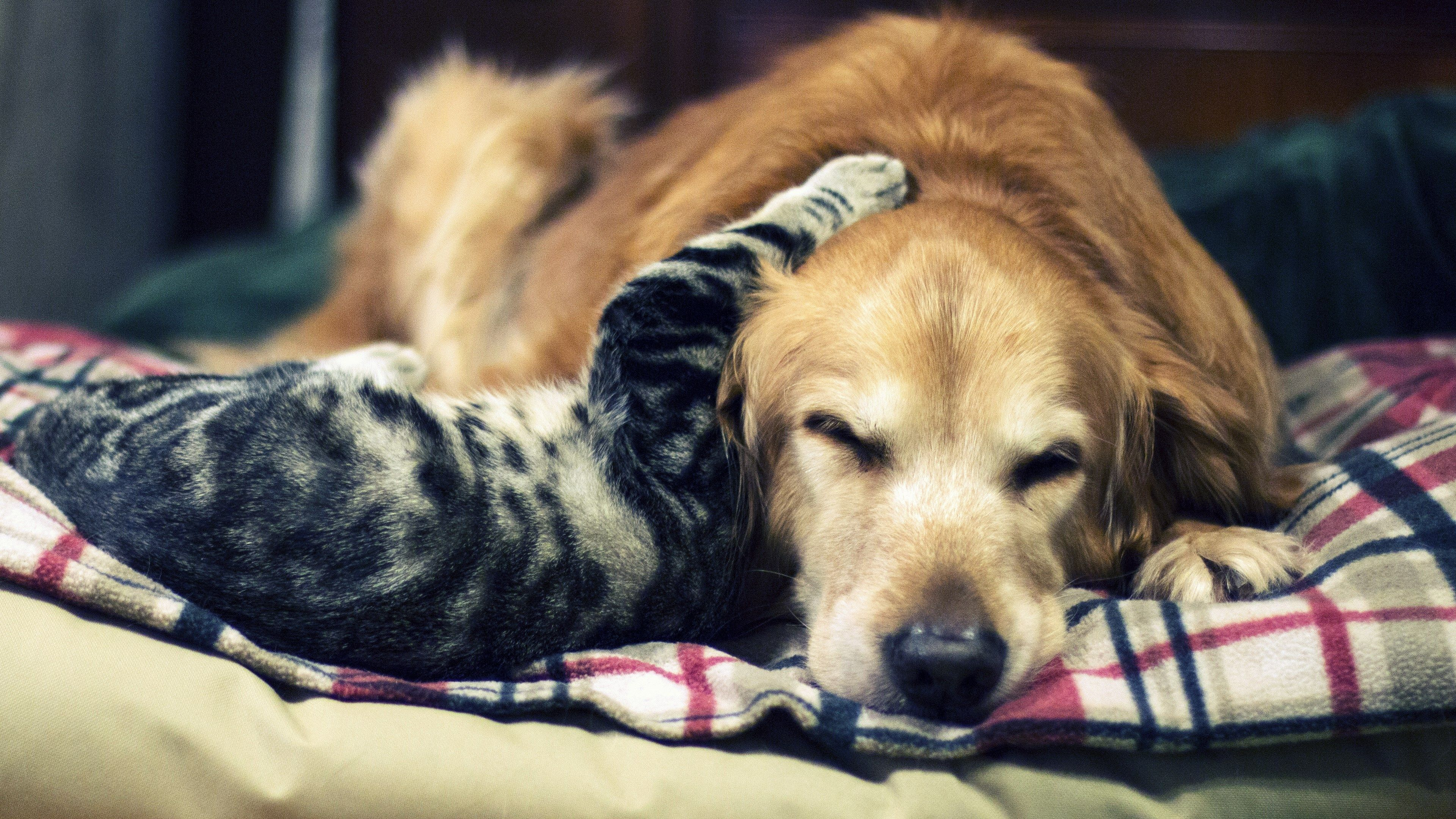 Cute Cat And Dog 4k Wallpaper For Desktop Ololoshenka Dogs Cats