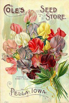 Vintage Seed Labels on Pinterest | 118 Pins
