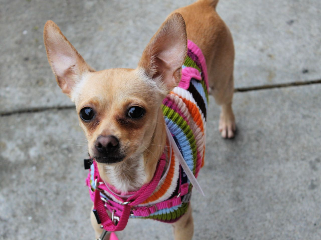 Wallace is a total teeny sweetie ready for kisses and