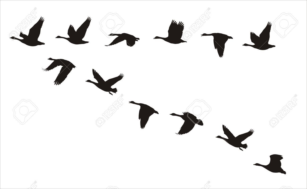 Silhouettes Of Flock Of Flying Canadian Geese Royalty Free