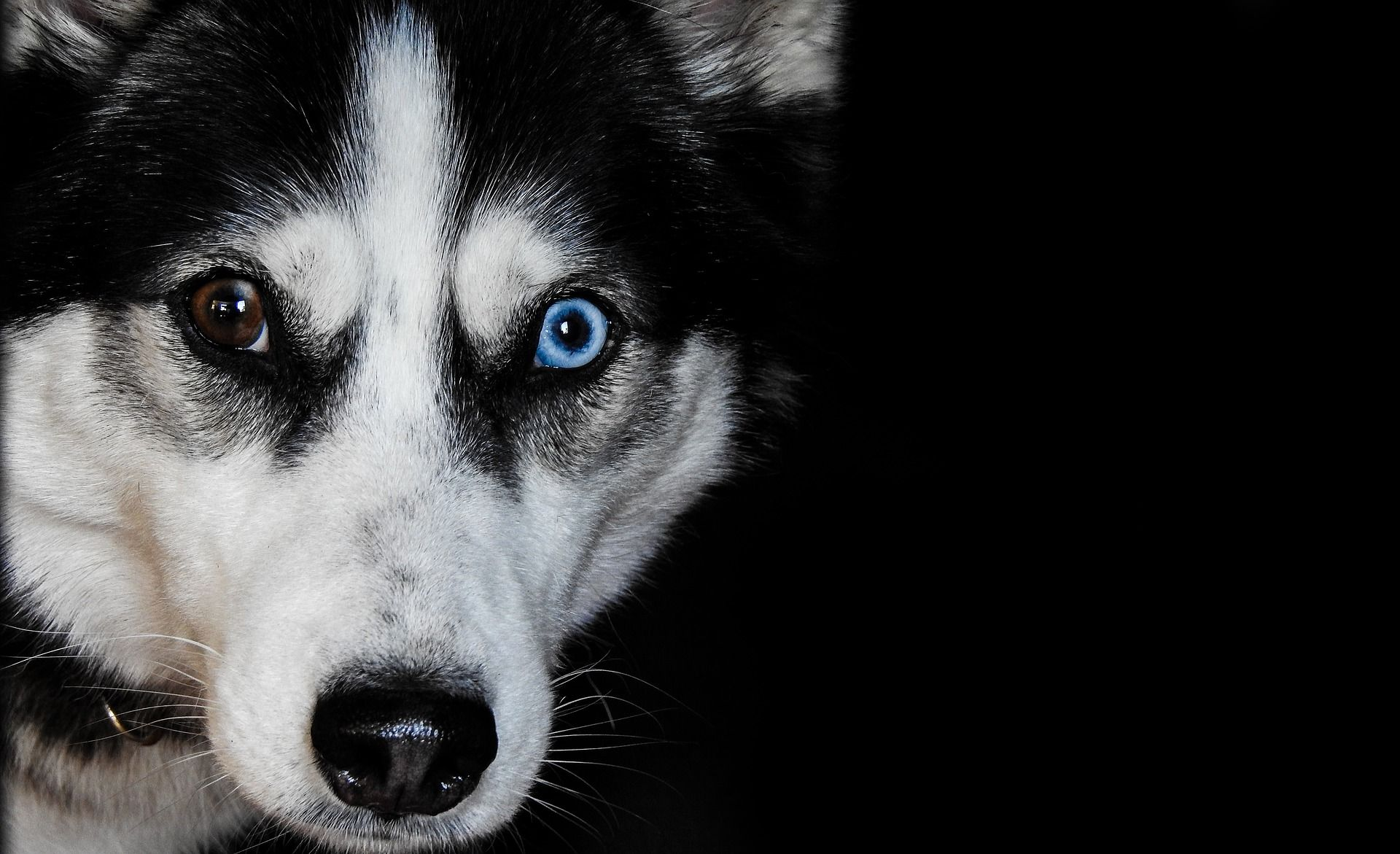Idea By Gregory J Lerma On Husky Eyes Different Dog Breeds That