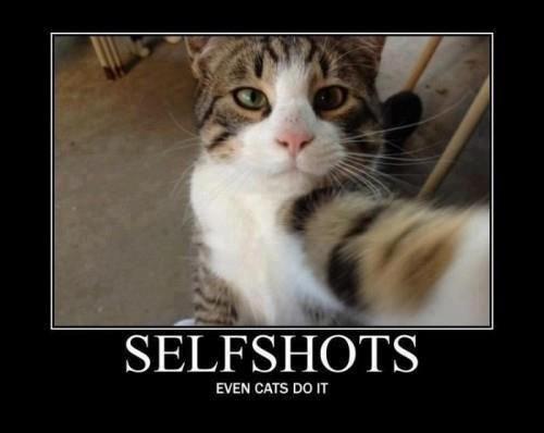selfshots..even cats do it