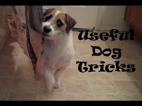 The Intelligent And Conscious Behavior Of Dogs Video Dog Hacks
