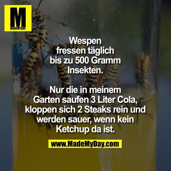 Wespen fressen täglich bis zu 500 Gramm Insekten. Nur die in meinem Garten saufen 3 Liter Cola, kloppen sich 2 Steaks rein und werden sauer, wenn kein Ketchup da ist.