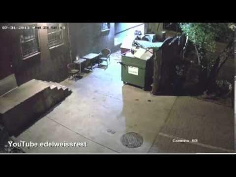 Bear steals entire dumpster from restauran