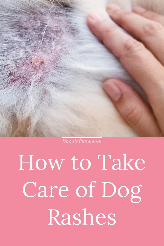 How To Take Care Of Dog Rashes Doggie Cube Dog Rash Dog Dry Skin Dog Skin Care