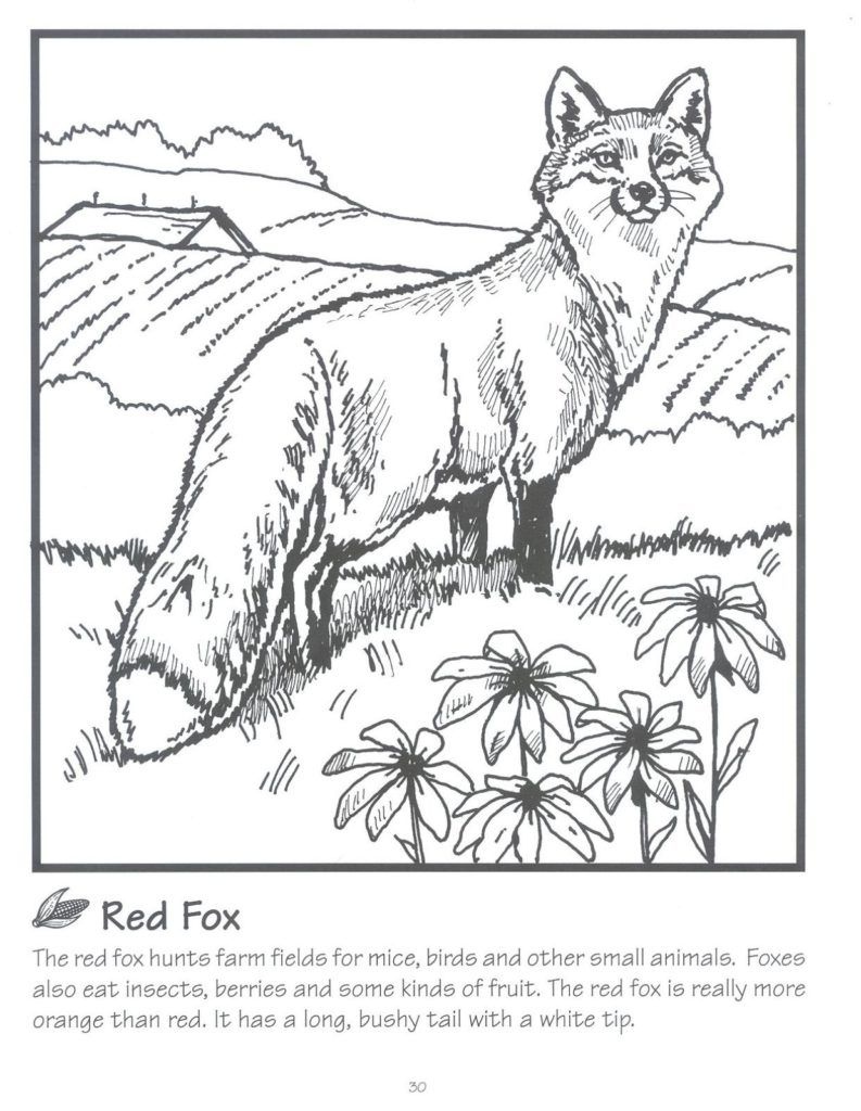 Coloring Rocks Animal Coloring Pages Fox Coloring Page Bird Coloring Pages