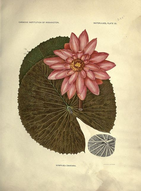n370_w1150 by BioDivLibrary, via Flickr