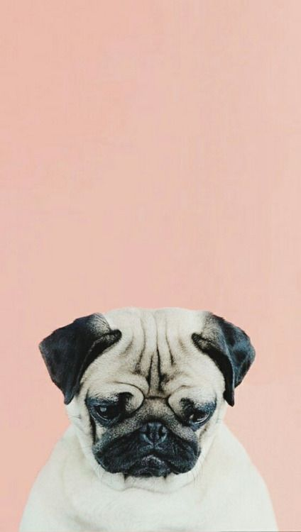 Pin By Angelica On Pugs Dog Wallpaper Dog Wallpaper