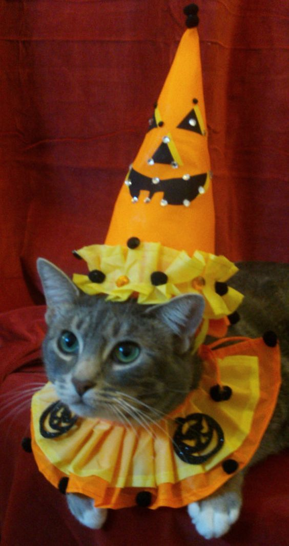 Cat Safety: 7 Hidden Dangers Of Halloween