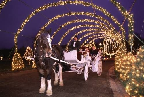 Christmas Light Displays In St Louis.Christmas Lights In St Louis Way Of Lights In Belleville