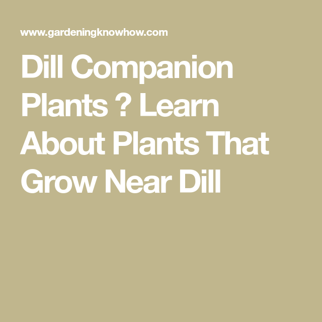 Companion Plants For Dill What To Plant With Dill In The 400 x 300