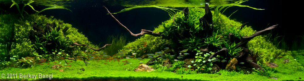 Planted Tank Rule Of Thirds Main And Secondary