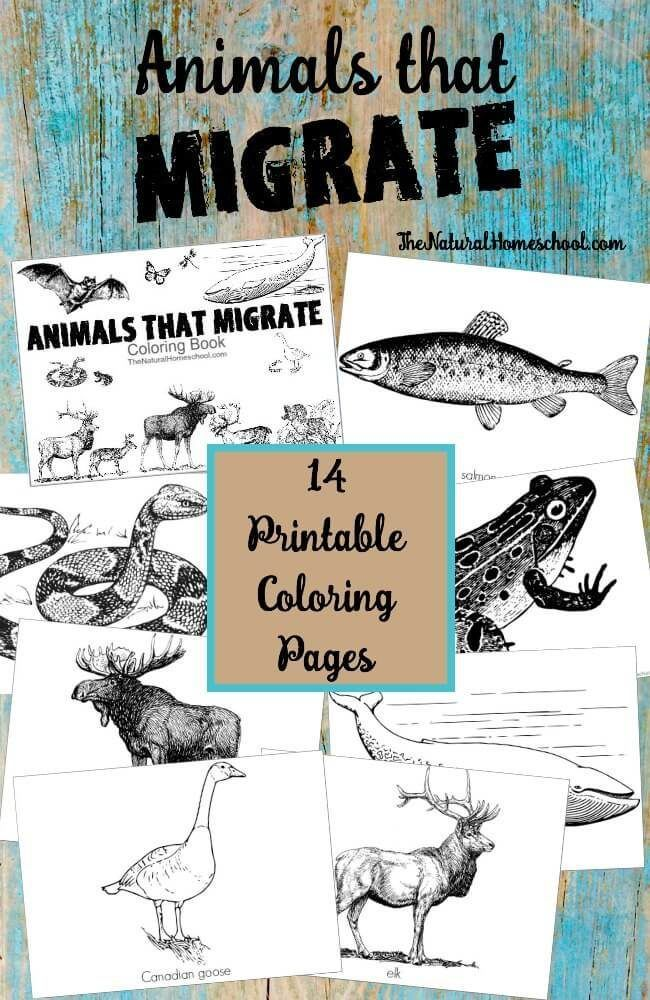 Animals that Migrate in Winter Printable Coloring Pages