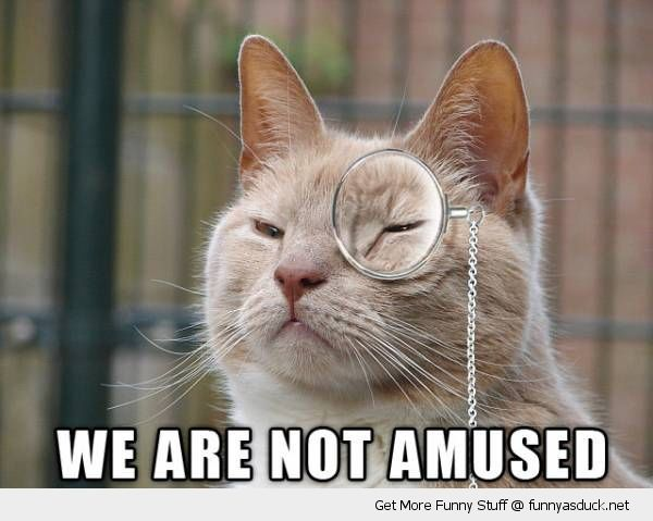Not Funny Cat Meme : We are not amused funnies rage comics funny