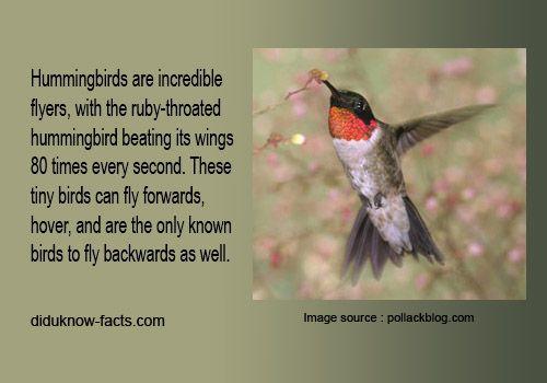 Hummingbirds Only Birds That Can Fly Backwards Hummingbird Tiny Bird Birds