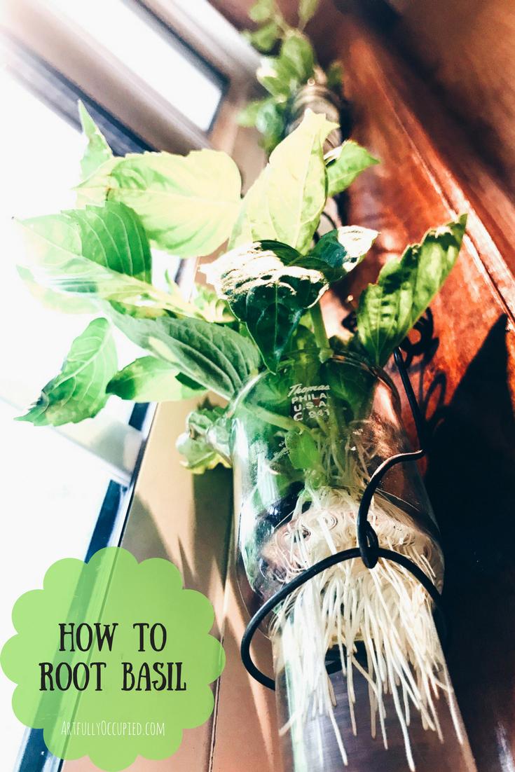 Herb Gardening Tip: How to Root Basil Indoors   Gardening ...