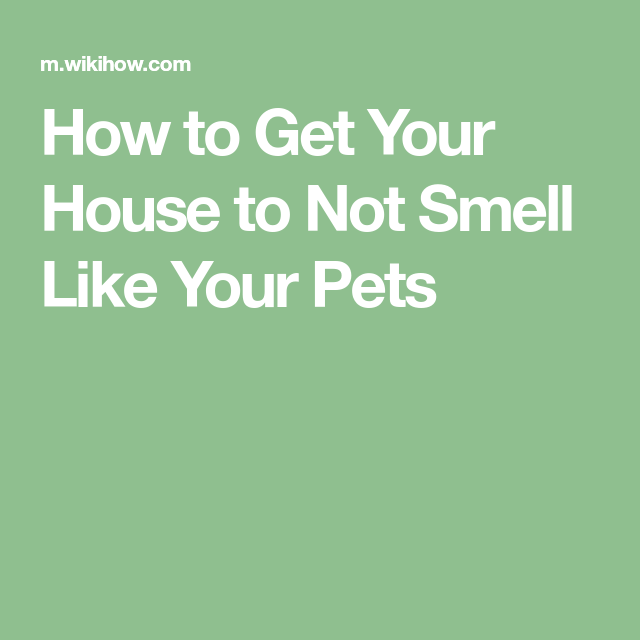 Get Your House To Not Smell Like Your Pets